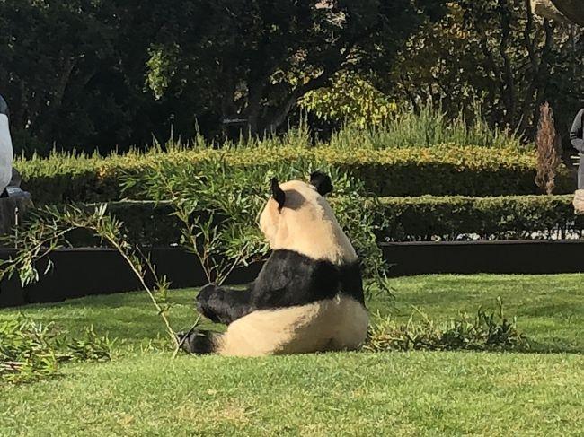 2017年最後の旅行です。<br /><br />行こうと決めたのは11月8日ごろ。<br />夫の年末休暇が早めだったので、まだ2人で行ったことのない和歌山へ行く事になりました。<br />今、東京の上野動物園ではシャンシャンが大人気ですね(^-^)<br />日本の動物園でパンダがいるのは上野動物園と王子動物園、アドベンチャーワールドの3か所です。王子動物園は以前行った事があったので、前から気になっていたパンダの数が日本一いるアドベンチャーワールドへ。<br /><br /><br /><br /><br />【1日目】大阪<br />自宅→神戸(ランチ:ケーニヒスクローネ)→大阪(1泊)<br />宿泊先:コートヤード・バイ・マリオット新大阪ステーション<br />この日はホテルから出てません。<br /><br />【2日目】和歌山<br />マリオット新大阪ステーション→アドベンチャーワールド→和歌山(1泊)<br />宿泊先:白浜古賀の井リゾート&amp;スパ<br /><br />【3日目】<br />和歌山→大阪→自宅<br />