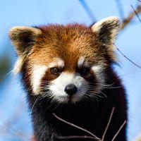 野田/松戸/船橋ぐるり旅【7】~レッサーパンダが可愛い~市川市動植物園