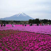 河口湖&富士芝桜まつり