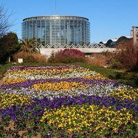 三陽メディアフラワーミュージアムで冬のお花を楽しむ     *:゜☆ヽ(*'∀'*)/☆゜:。*。