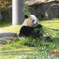 ええ大人がパンダを白浜へ見に行く。