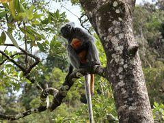 ボルネオの自然を求めてインスタ映えするニャンコの町・クチンへ(2)~バコ国立公園