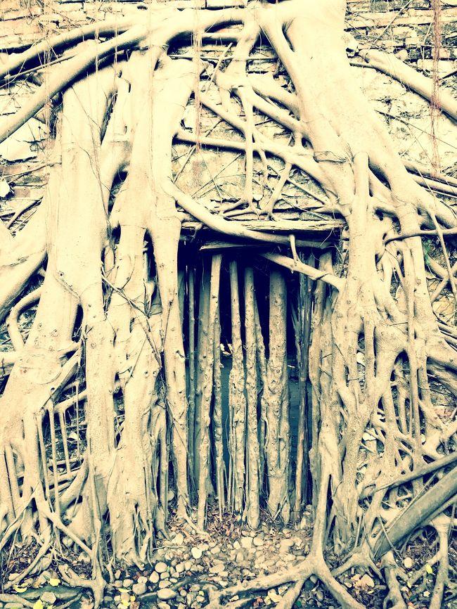 冬の台南 毎日、食べ歩き