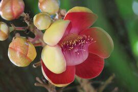 Laos メコンの宝石(2/20) ビエンチャンと世界遺産ルアンパバンの花と植物 ~ミツバチばあやの冒険~