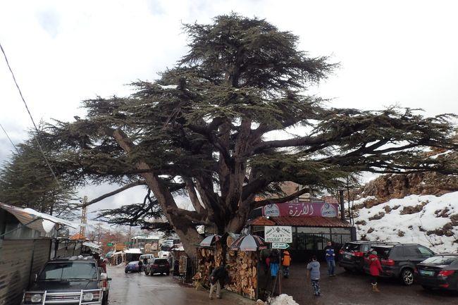 レバノンの国旗にもなっているレバノン杉。レバノンの国中でレバノン杉をプッシュしているのでとりあえず見ておこうと思いベイルートから日帰りでレバノン杉を見に行った。レバノン杉は日本の杉とは形状が異なり保護区にある杉はボロボロな個体がばかりで、杉よりも最寄のブシャーレの街並みを山の上から見下ろした風景の方が何となくマチュピチュにも似ている感じで素晴らしかった。<br /><br />中東では珍しくレバノンにはいくつかのスキー場がありレバノン杉の近くにもスキー場があるので滑ってみたかったが雪が少なくオープンしていなくて残念だった。