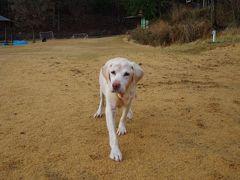 愛犬と初の旅行! 目指せ『無人島』 その1