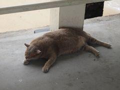 東南アジア一周Day6:シンガポール~猫島訪問。そしてKLへ出発!~