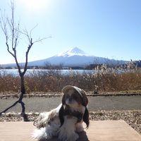 晩秋の伊豆/河口湖♪ Vol10(第3日) ☆河口湖:「大石公園」絶景の富士山♪