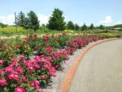 花の岩見沢 いわみざわ公園バラ園 II