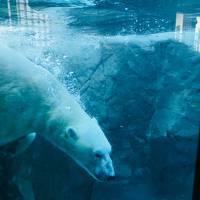 ホテル付札幌ツアーついでに旭山動物園
