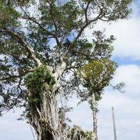 冬の沖縄は寒緋桜満開で暖か。リッツカールトン沖縄で極上のリゾートを