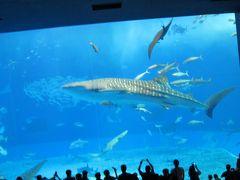 【2】2017秋旅★沖縄物語★ナンパで美ら海水族館にラクラク移動♪夏を追いかけて♪