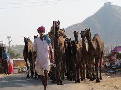 初インドを一ヶ月縦断一人旅してみた 6日目 続ラクダ市と山登り