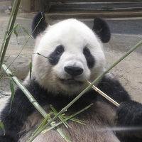 シンシン公開前の上野動物園