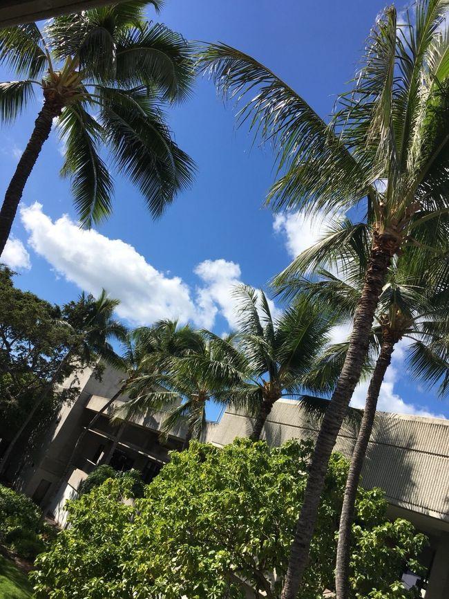 新春セールでハワイアン航空がなんとサーチャージ、税金を入れても30000円ちょっとだったので<br />急きょ決定したハワイ旅行。<br />出発日も帰国日も指定だったため、3泊5日の弾丸旅行でしたが<br />2018年1発目の海外旅行は久しぶりのハワイとなりました。<br /><br />ハワイアン航空利用 <br />ホテルはワイキキバニアン(HISの新春セール利用)