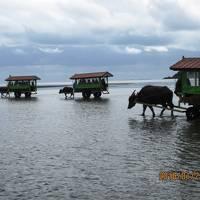 沖縄離島の旅:P3.西表島