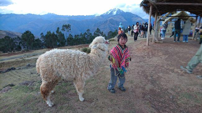 オジャイタイタンボ<br />~高原列車インカレイル~<br /><br />インカの聖なる谷 ;5000m級の山に囲まれ昔のままの暮らしを続けるインカの末裔<br /> アルパカ、リャマ、ビクーナ、テンジクネズミ と遊ぶ<br /> ウルバンバ渓谷<br /> ペルー教員のストライキに道路を封鎖され車体に大きな落書きをされる<br /> 数日前はインカレイルの線路が封鎖され列車が止められたとか、、、、<br />  給料が低いとか、教員の資質が問題だとか、、、、、それにしても激しい!!<br /> 断崖絶壁を登ったところにあるかの有名なカプセルホテル?を見上げて通過<br /><br />マラス塩田 日本では高価な『アンデスの塩』『インカ天然塩』の故郷へ<br /><br />円形段々畑モライ:すばらしい夕陽を眺めながら