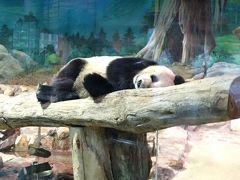 LCC週末台北③ とことん雨 ~こんな日はパンダ、買物、食べ歩きの巻~