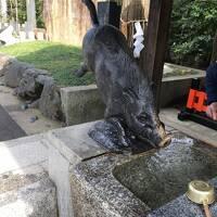 姪のお祝い事で京都へ  前日は夫の御朱印集め〜