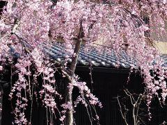 2017年4月3日 京都 その1 嵐山 渡月橋を渡って嵯峨野湯豆腐方面、天龍寺へ。