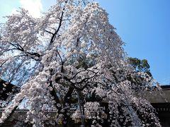 2017年4月3日 京都 その3 平野神社の桜と北野天満宮 上七軒
