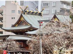 湯島天神「梅まつり」の後は 東京大学本郷キャンパスへ