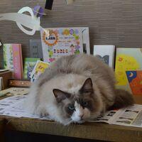 大阪☆猫の図書館 ネコノミクスってニャンだ(=^・^=)