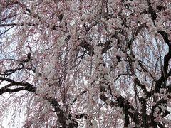 2017年4月3日 京都 その4 千本釈迦堂、釘抜地蔵、雨宝院、妙蓮寺、本法寺、本満寺