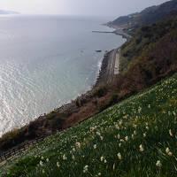 水仙咲く国生みの島へ【1】~伊弉諾神宮と灘黒岩水仙郷~