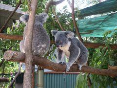 オーストラリア7日目:動物園と土ぼたる