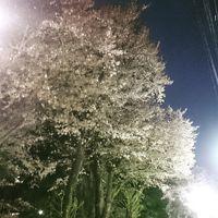 東京散歩♪ vol.46 March~April~☆