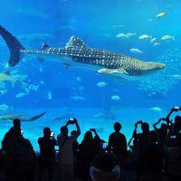 初めての沖縄旅行(その1)《海洋博公園・沖縄美ら海水族館編》