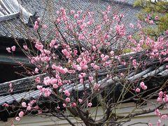 2018年2月 福岡 その1 久留米 地場産くるめ・梅林寺・世界のつばき館に行きました。