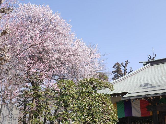 3月に入り、気温も上昇し、暖かくなりました。春の接近も実感。<br />安行に梅の花を見に行きました。天気も良く、暖かな日だったので、人も出ていました。<br />興禅院と花と緑の振興センターで梅の花見です。