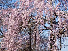 2017年4月4日 京都 その1 石塀小路、高台寺近く、二年坂、三年坂、清水寺周辺の散歩