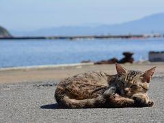 福岡の猫島『相島』で癒されまくる