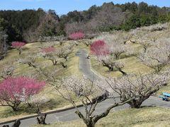 2018春、静岡西部の梅の名所巡り(6/10):3月2日(6):豊岡梅園(3):四万坪の梅園、梅酒用の生産梅林、南高、古城、改良内田