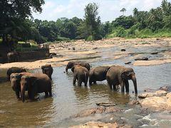 2017GWは3泊5日のスリランカ旅行へ①出発~ピンナワラの象の孤児院へ