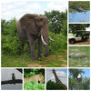 絶景を求めて、遠かった南部アフリカVol.2(チョベ国立公園)