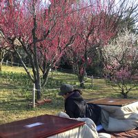 大阪 多国籍グルメ� コタツでヌクヌク梅の花見♪。大阪3大梅見めぐり&インド料理