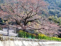 2017年 京都 4月4日 その2 京都定期観光バスツアーで琵琶湖疎水通船に乗り大津に向かいました。