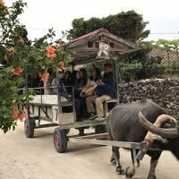 年末年始に石垣島と竹富島へ娘と二人旅