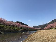 静岡県 河津桜の旅