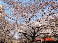 2017年京都 4月4日 その4 定期観光バスで南禅寺拝観。その後は平安神宮、白川散歩