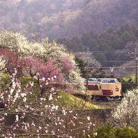 ありがとう189系ホリデー快速富士山号ラストランと高尾梅郷に咲き広がる紅白の梅の花を見に訪れてみた
