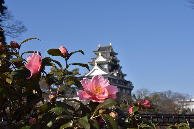 開園記念日で無料開園の岡山後楽園を散策。<br />ついでに倉敷美観地区も。<br />