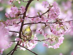 春の光 ~名古屋からのプチ旅~