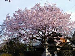 2017年京都 4月5日 その1 早朝に哲学の道を散歩 空に虹がかかっていました。法然院へ。