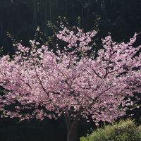 秘境温泉の一軒宿 ~奈良県上湯温泉・神湯荘~