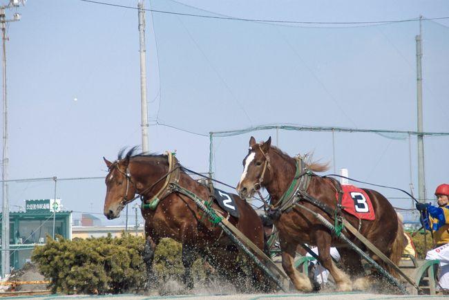 前日は十勝川温泉でのんびりとした一日を過ごし、<br />今日は帯広のばんえい競馬を楽しむことに。<br />夜は帯広市内の居酒屋に行ってみます。<br />ばんえい競馬は過去に旭川・北見・岩見沢でも<br />開催されていたが、今は帯広だけで開催されている。<br />体重800~1000kgのごっつい馬が騎手と重りを乗せた鉄製の<br />そりを曳き、コース内にある2ヶ所の坂を乗り越えて<br />ゴールを目指すレースは間近で見るととても壮観です。<br />